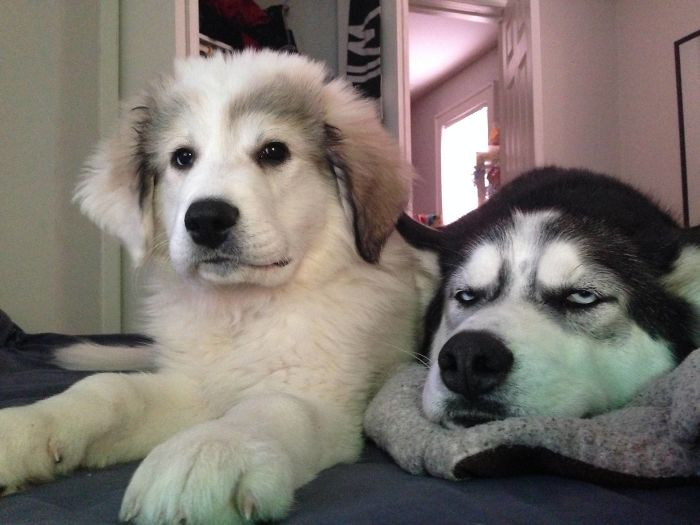 dogs reaction with having a younger sibling