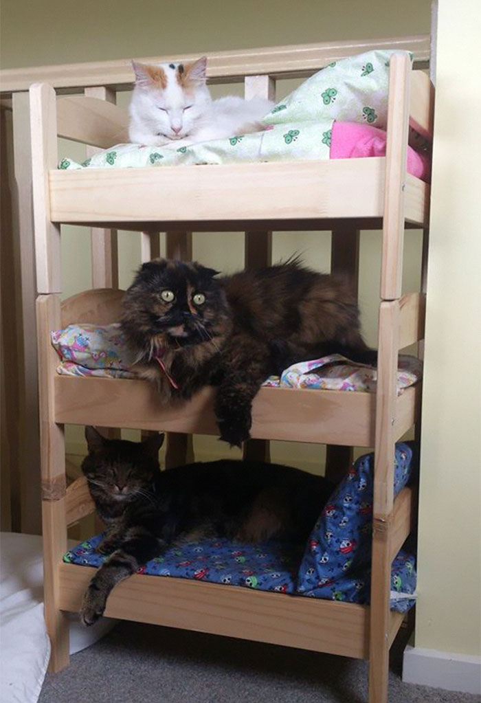 doll beds turned into bunk beds for cats