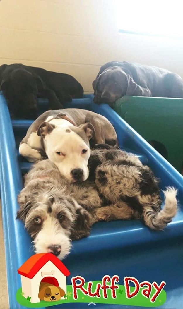 edna cuddles up to a fluffy dog