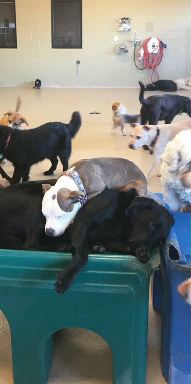 edna curls up to a big dog at the daycare