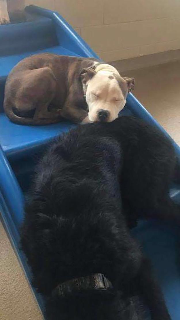 edna naps next to a big doggo