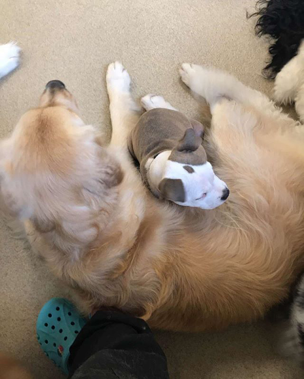 edna snuggles up next to the fluffiest dogs