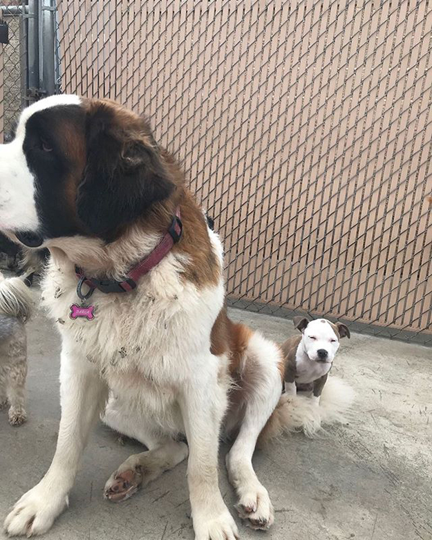 edna the puppy naps on the fluffiest dogs in doggy daycare