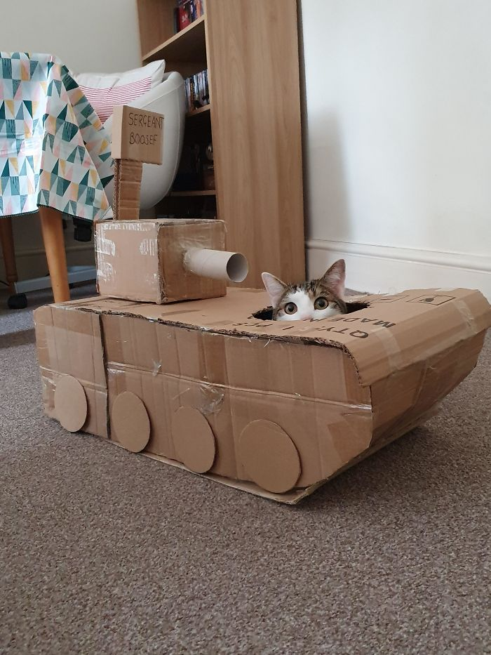 feline military vehicle made from boxes