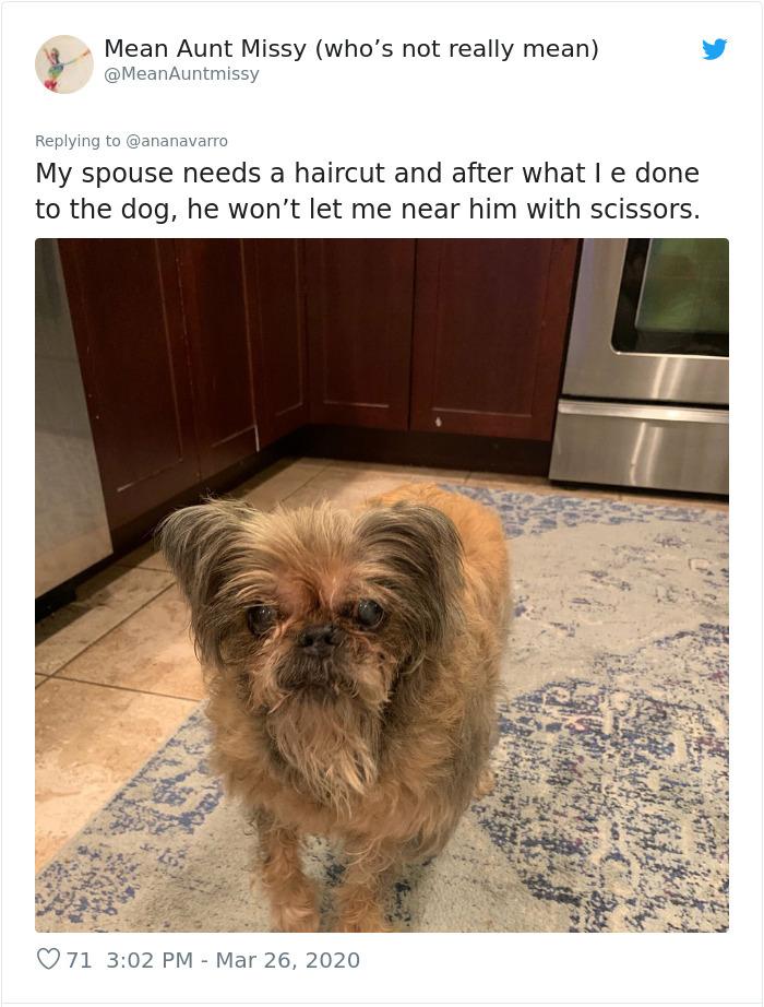 funny dog haircuts grooming fail