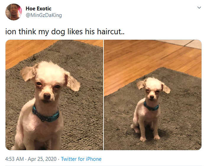 funny dog haircuts menacing stare