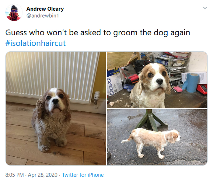 funny dog haircuts pup not impressed
