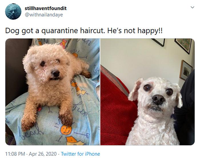 funny dog haircuts quarantine edition