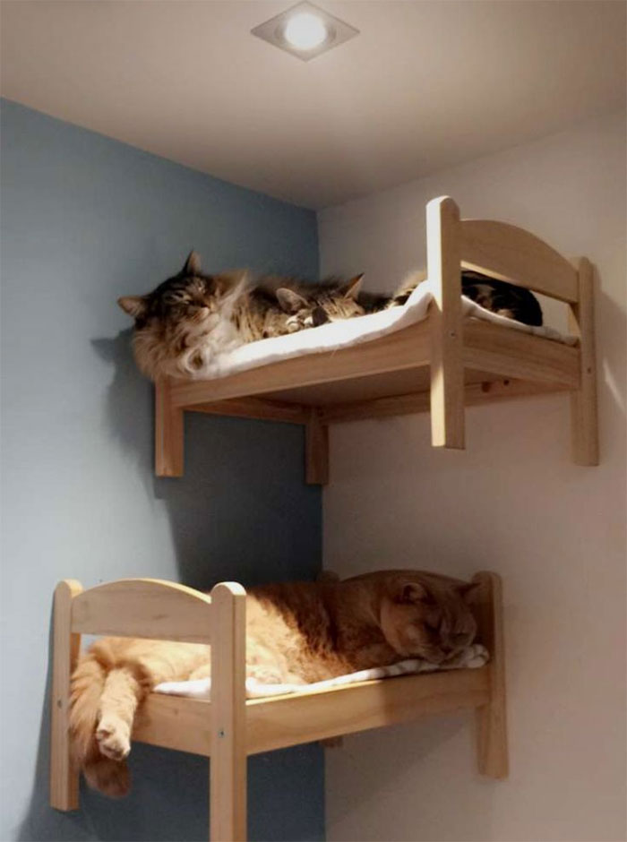 ikea mini beds used for cats