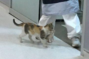 ill kitten