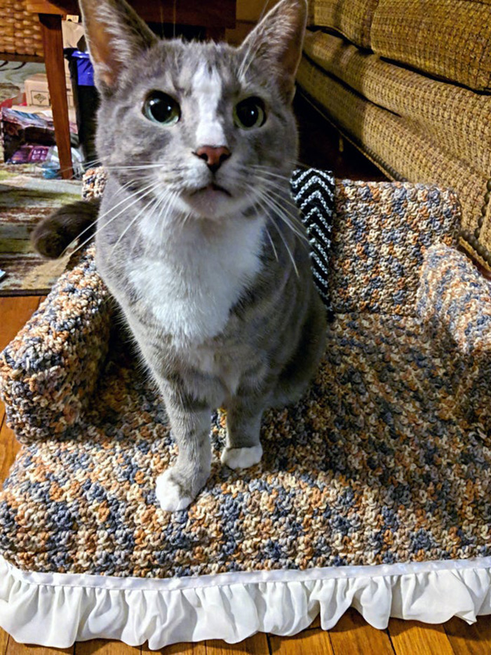 kitty sitting on tiny crocheted sofa