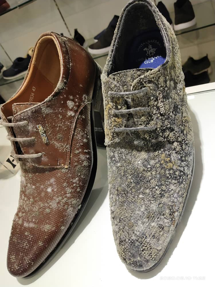 leather shoes covered in mold