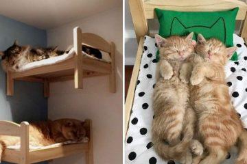 mini beds