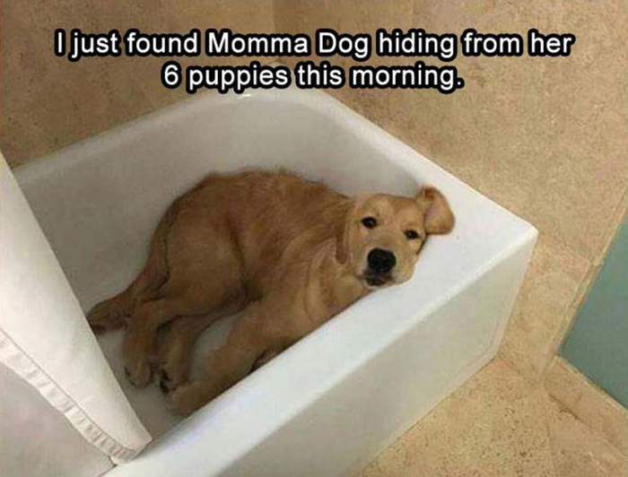 mom dog hiding from her puppies