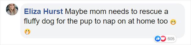mom needs to adopt a fluffy dog