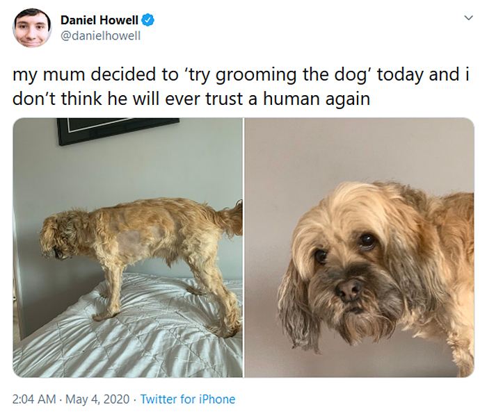 mom tries to groom pet fails
