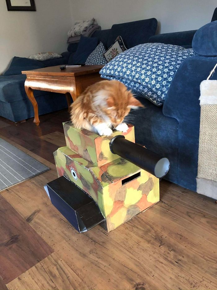 people in quarantine creates cardboard tanks for cats