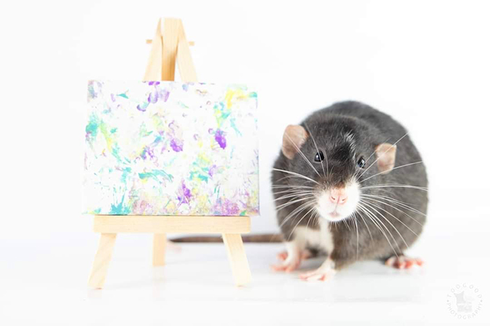 pet artistic rodents create miniature paintings