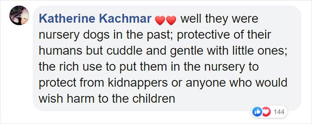 pitbulls are protective