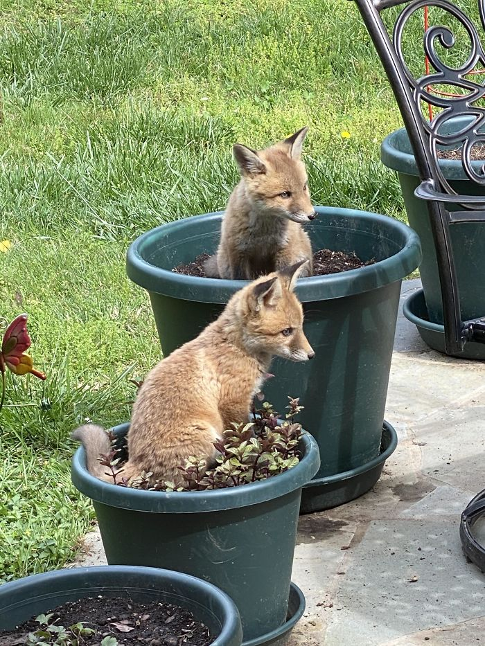 planted fox-tails on the patio