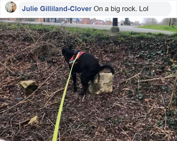 pooch pooping on a big rock