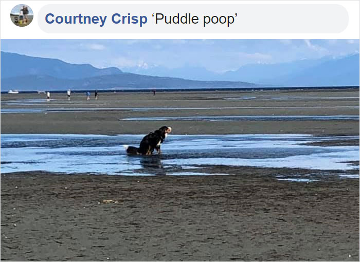 pooch pooping on the puddle