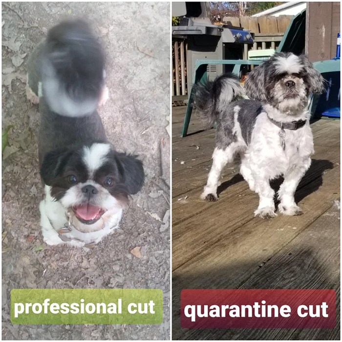 professional cut vs quarantine cut