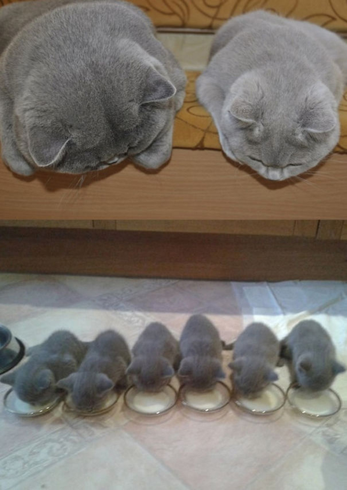 proud parents looking at their kittens