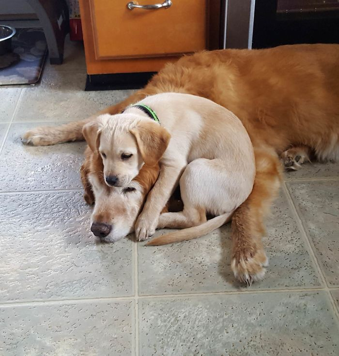 puppy on top of a doggo head