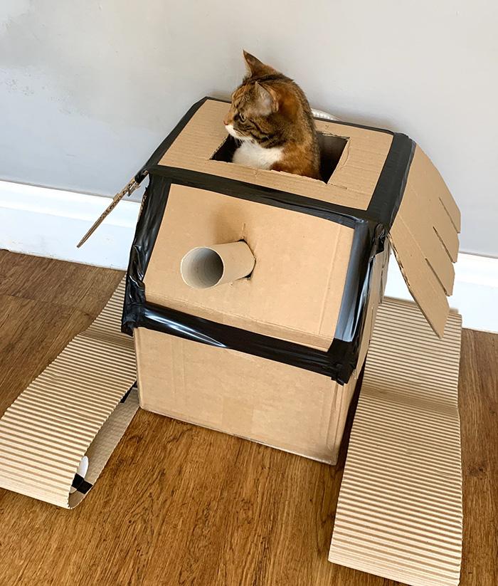 quarantine story cardboard tanks for cats