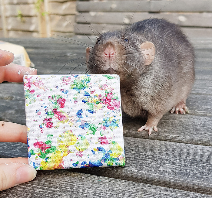 rats create miniature paintings