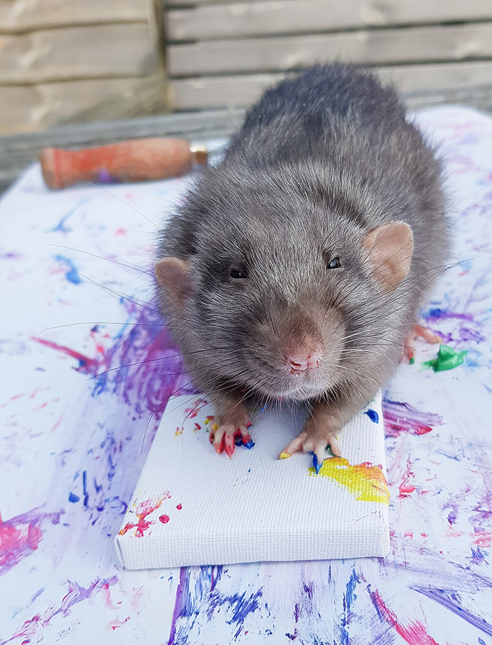 rats paw prints paintings