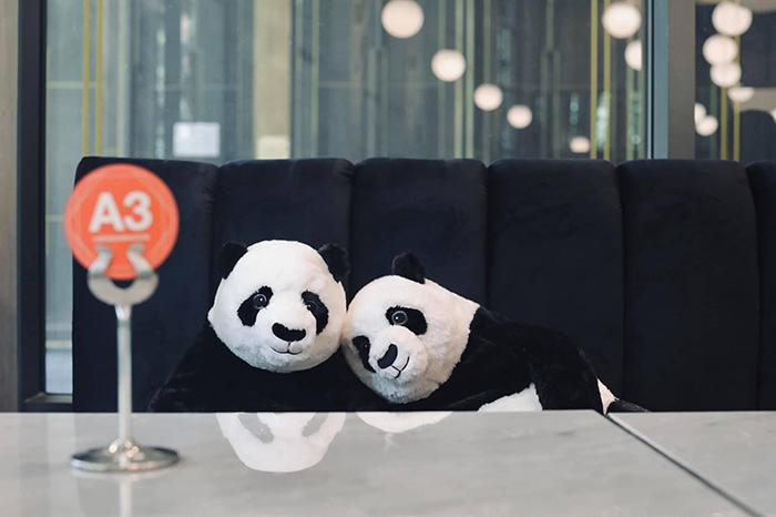 restaurant plush pandas keep company