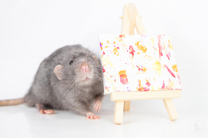 steph toogood pet rats create miniature paintings