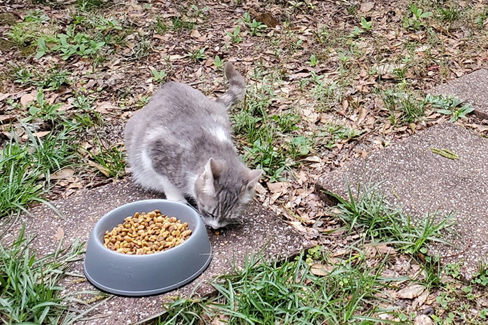 stray cat fed by a woman