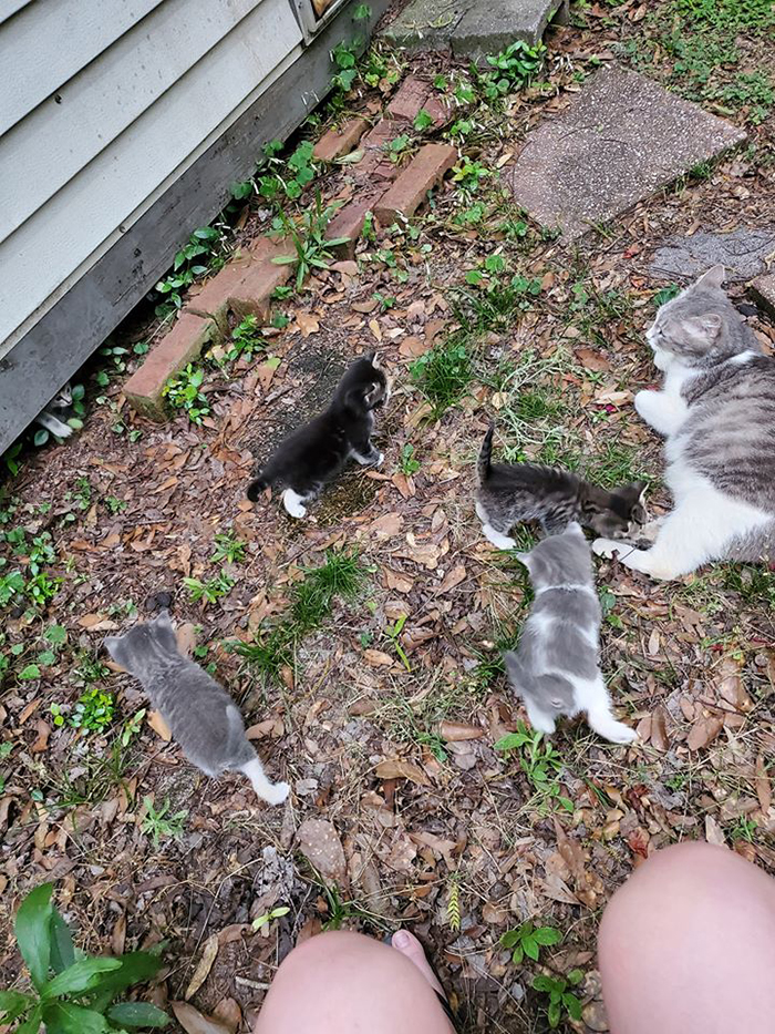 stray cat led introduces her babies to the woman feeding her