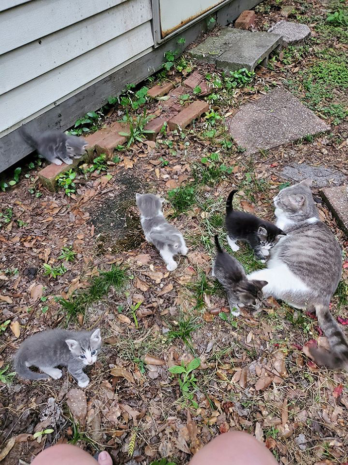 stray cat led woman to her babies