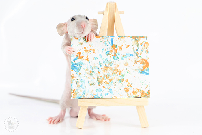toogoods tiny paws painter rats