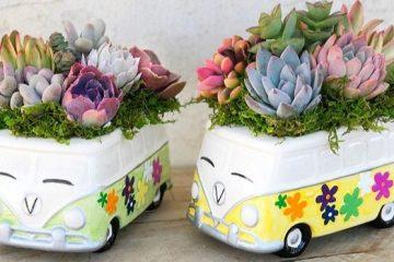 volkswagen bus succulent