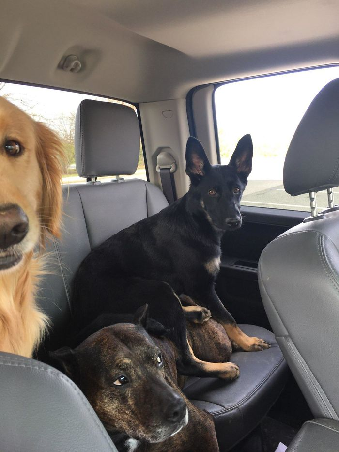 younger canine sibling ruined the trip