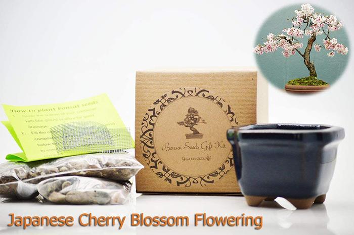 Cherry Blossom Bonsai Tree DIY Kit