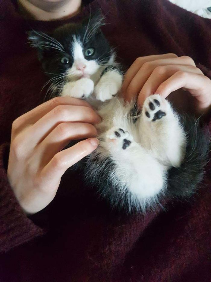 adopted kitty has one pink bean per foot