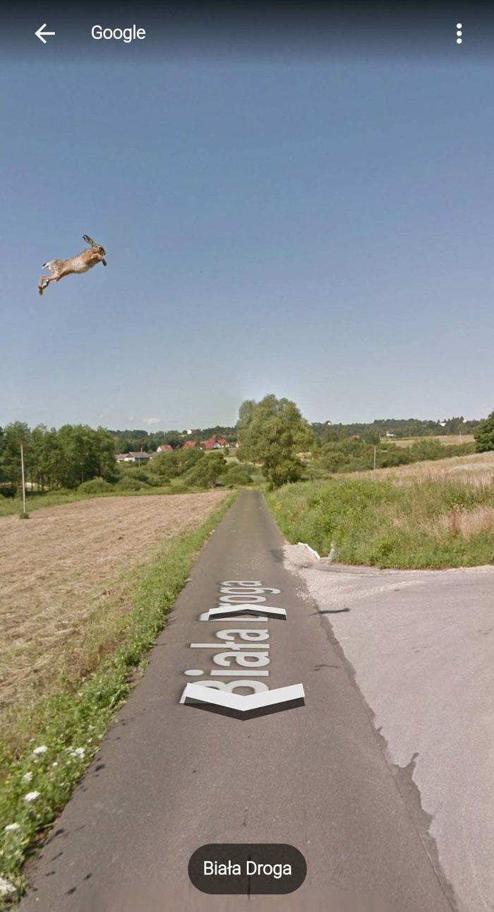 animal pics google map flying hare