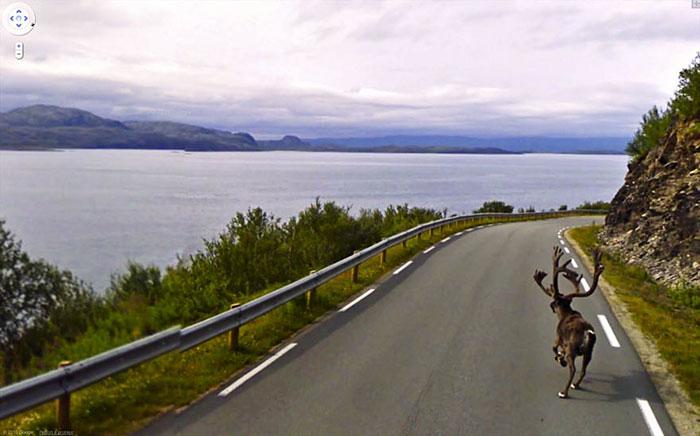 animal pics google map moose running