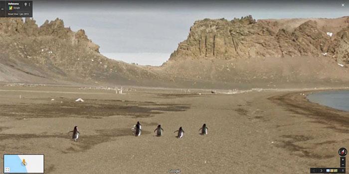 animal pics google map penguins
