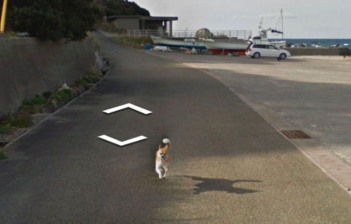 animal pics google map runner dog
