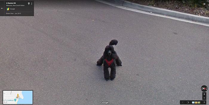 animal pics google map squatting dog