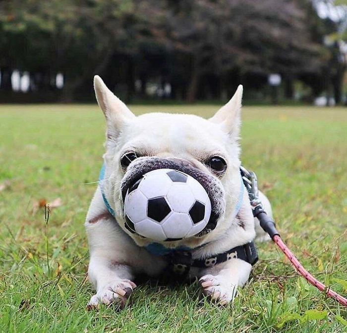 ball perfectly fits in doggos mouth