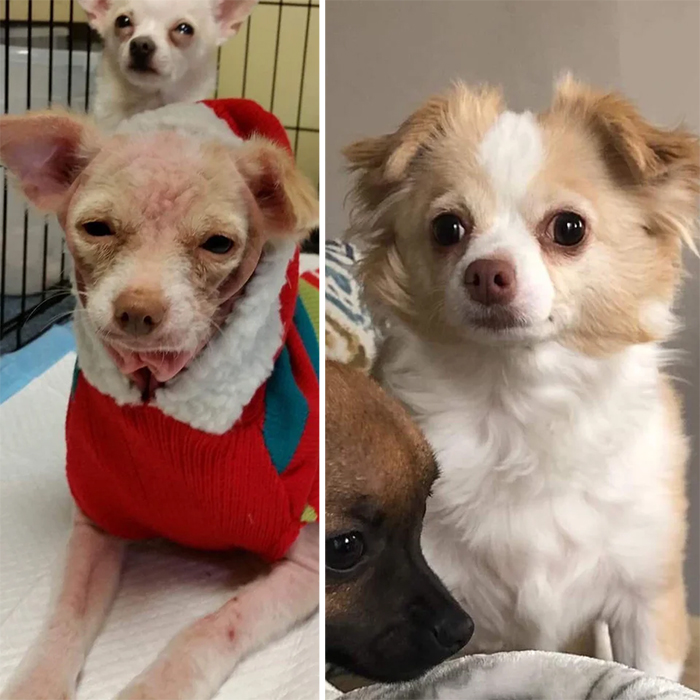 before and after adoption lucia the dog