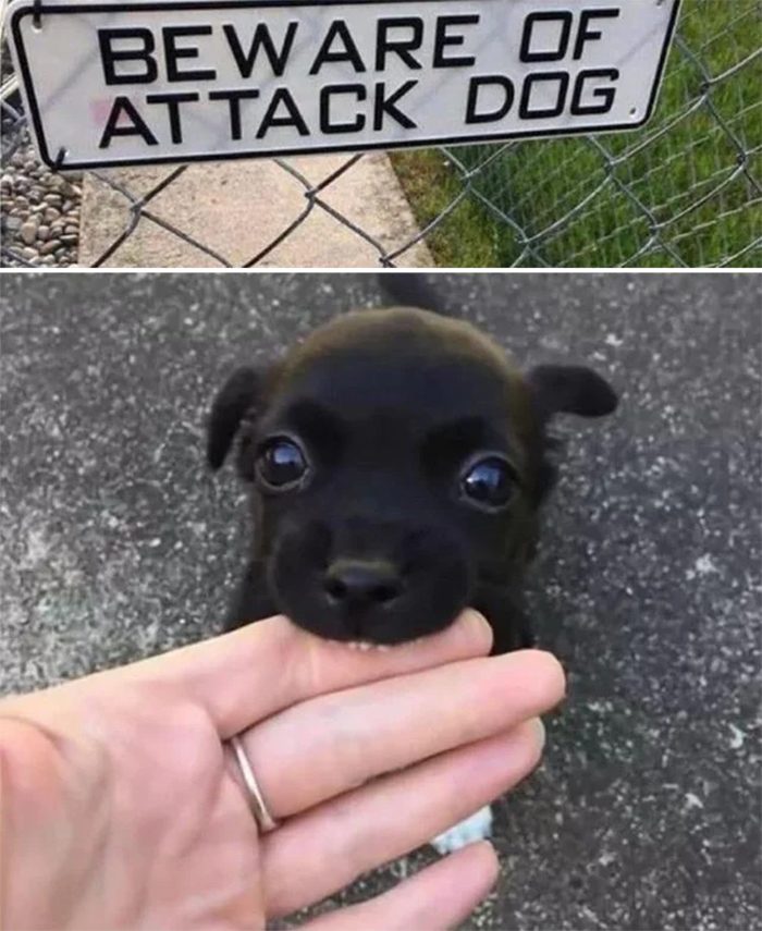 beware of the cute attack dog